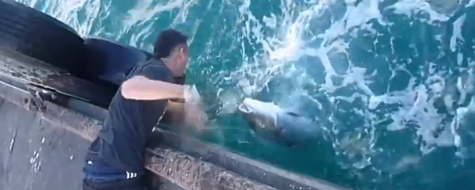 Guy-Catches- A-Huge-Fish-With-Bare-Hands.