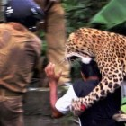 leopard-attacks-man